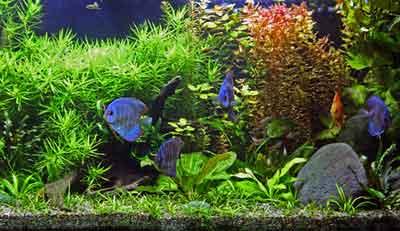 Akwarium Ryby I Rośliny Akwariowe Akwarystyka Dla Każdego