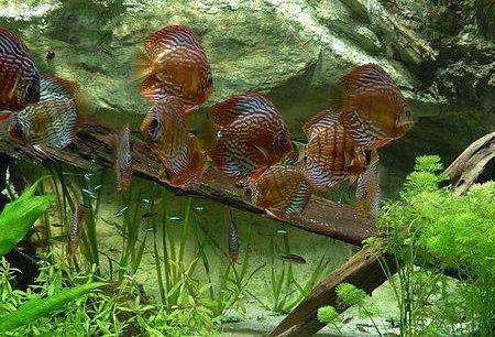 обустройство дна аквариума