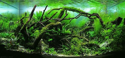 Choroby roślin akwariowych 10 Gallon Paludarium